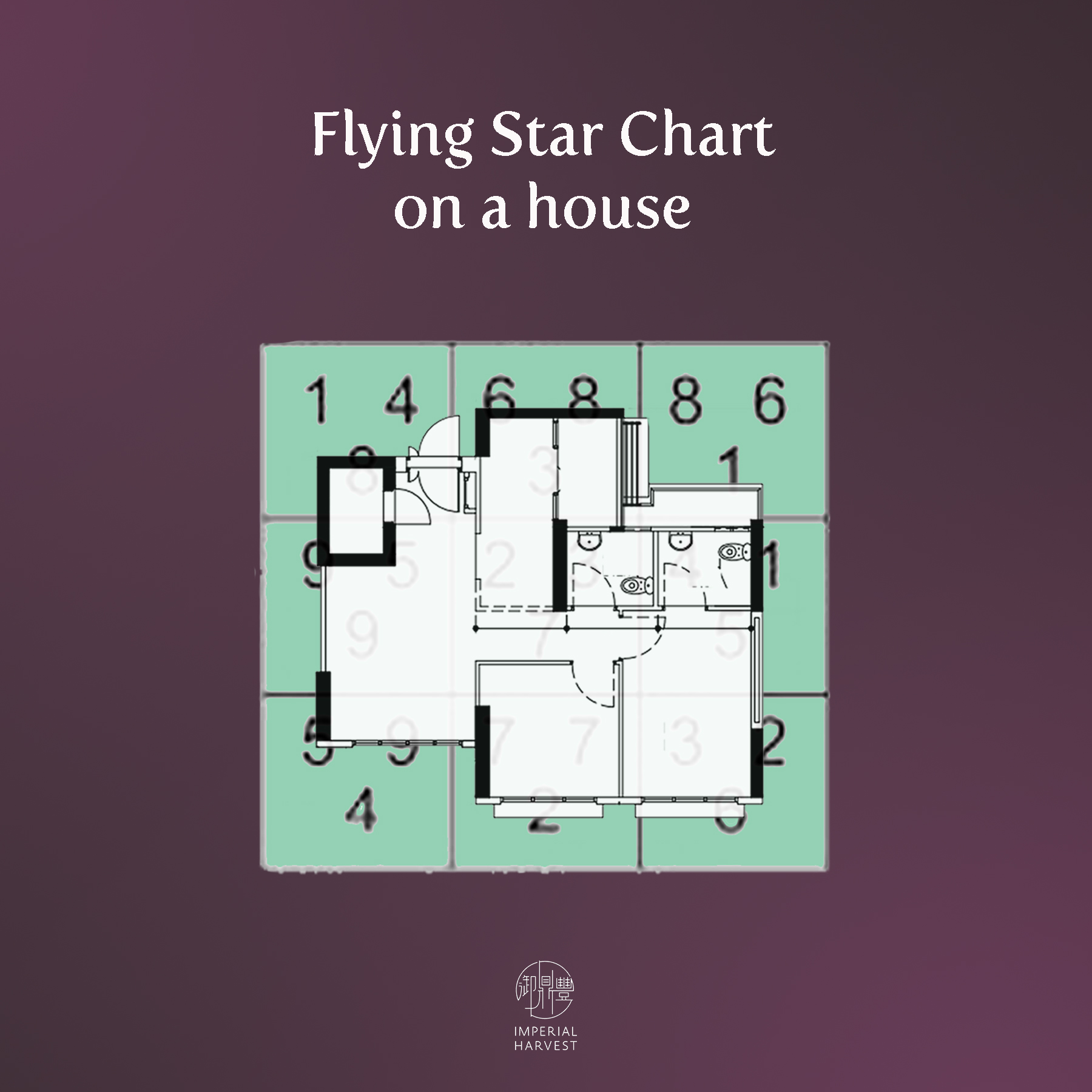 flying_star_at_home_2020