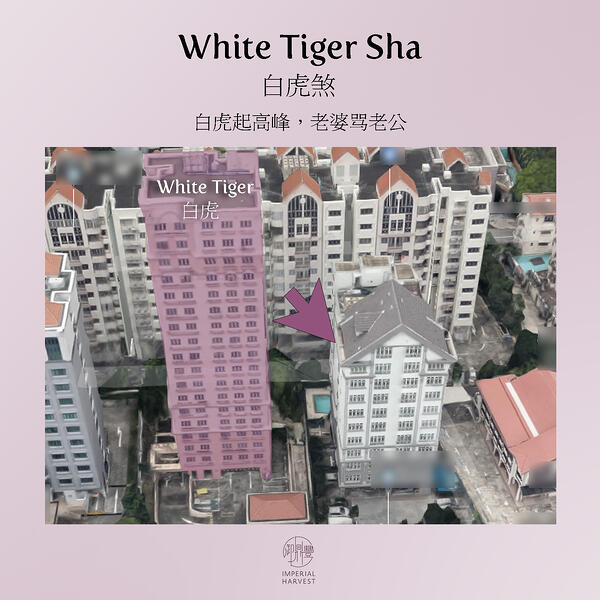 white tiger sha